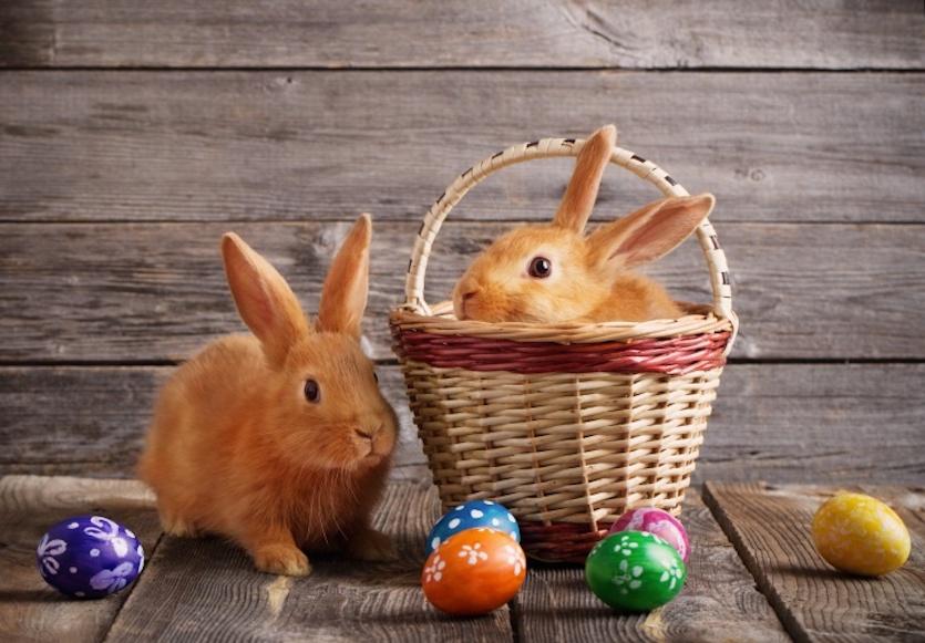 O Concello de sobrado organiza a busca do ovo de Pascua